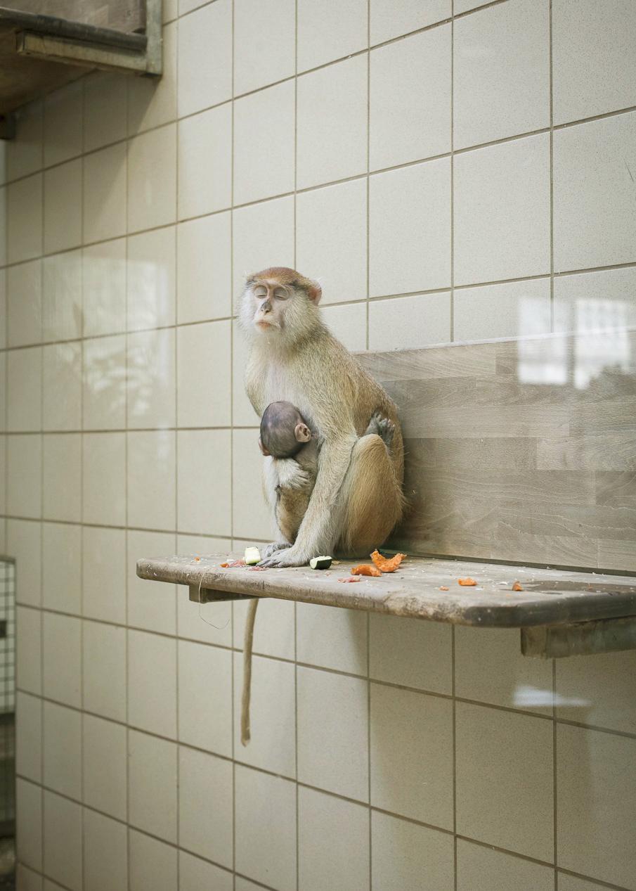 Smutné no pravdivé snímky zvierat zo ZOO